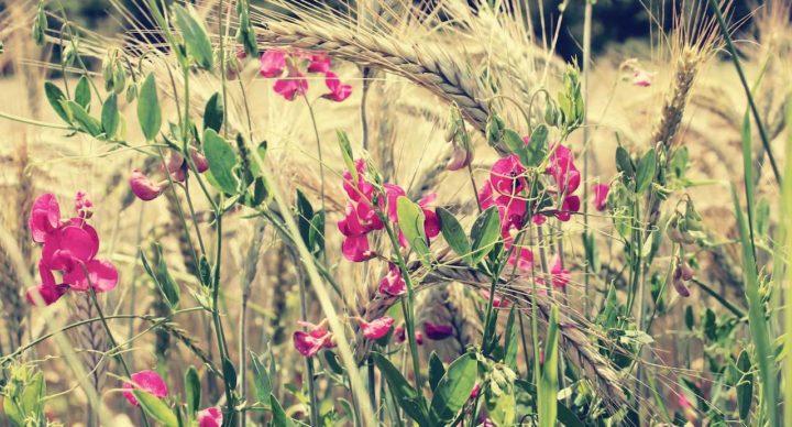 REUS - Curso y MASTERCLASS: Escaparatismo verano y primavera con materiales reciclados